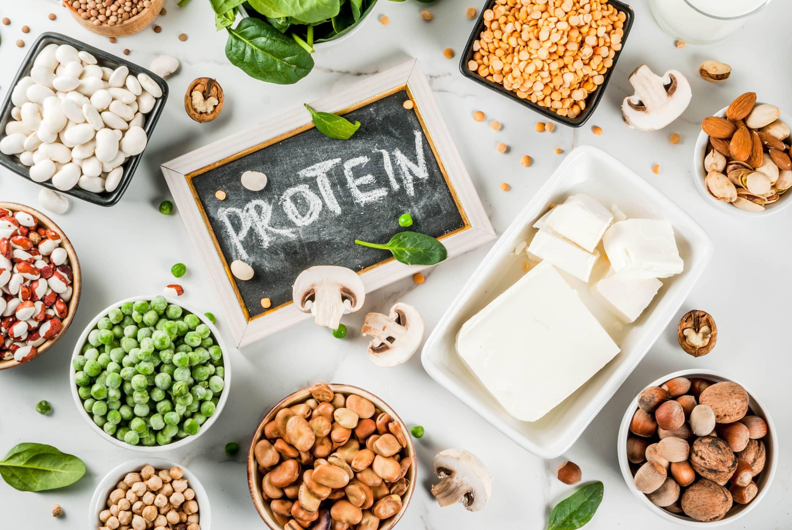 Protein & Fertility