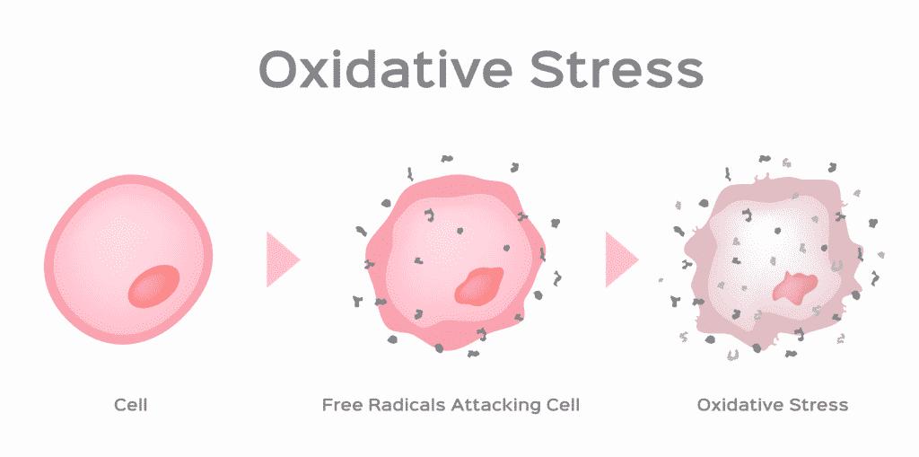Impact of oxidative stress on sperm