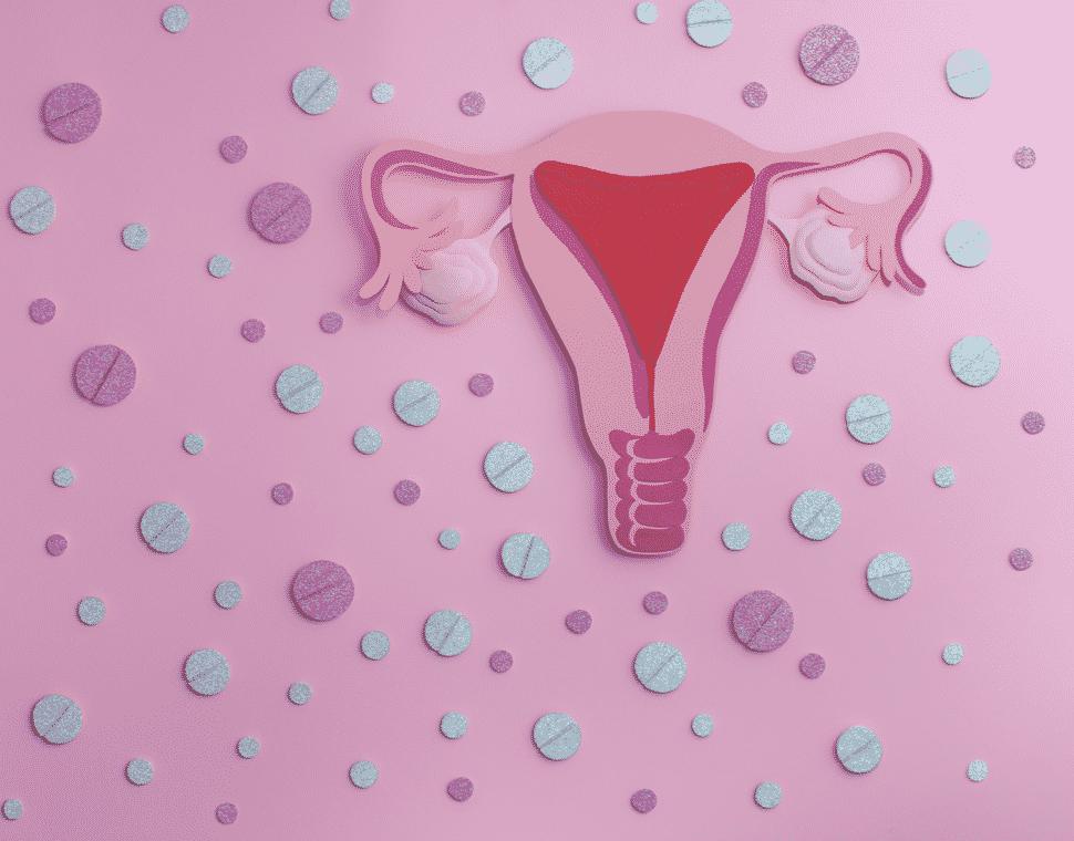 Supplements around uterus with eggs inside ovaries